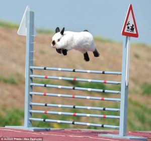 Snoopy, the star high-jumping rabbit of the Jena Kaninhop club.